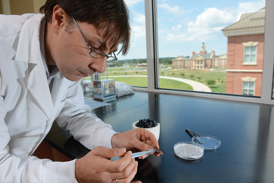 Research Team Seeks to Boost Berry Quality