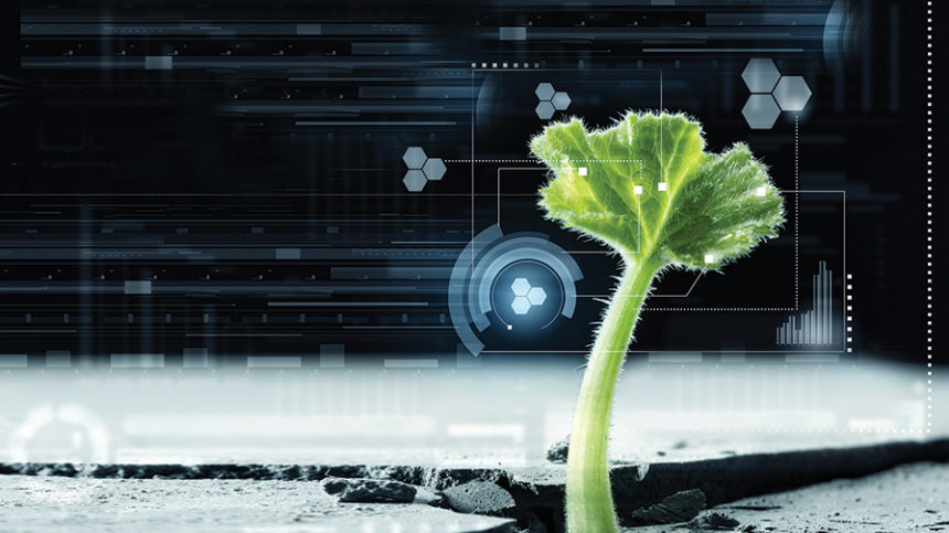Growers Deepen Biocontrol Use [2019 State of the Vegetable Industry]