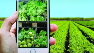 How Agriculture is Growing in Age of the Connected Consumer