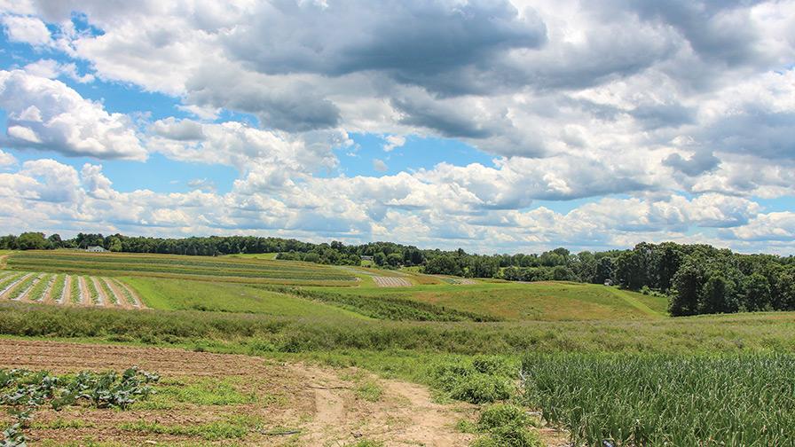 Janowskis-farm-Photo_feature