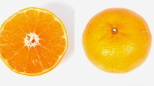New Citrus Variety Set to Go the Distance for Florida Growers