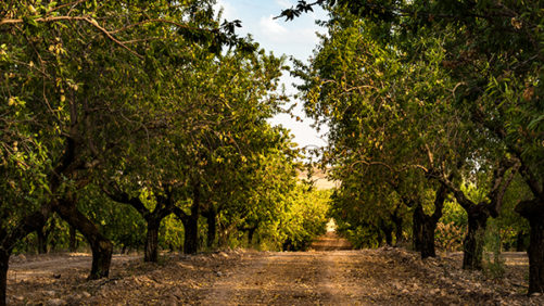 Your Three-Step Approach for a Strong Almond Season