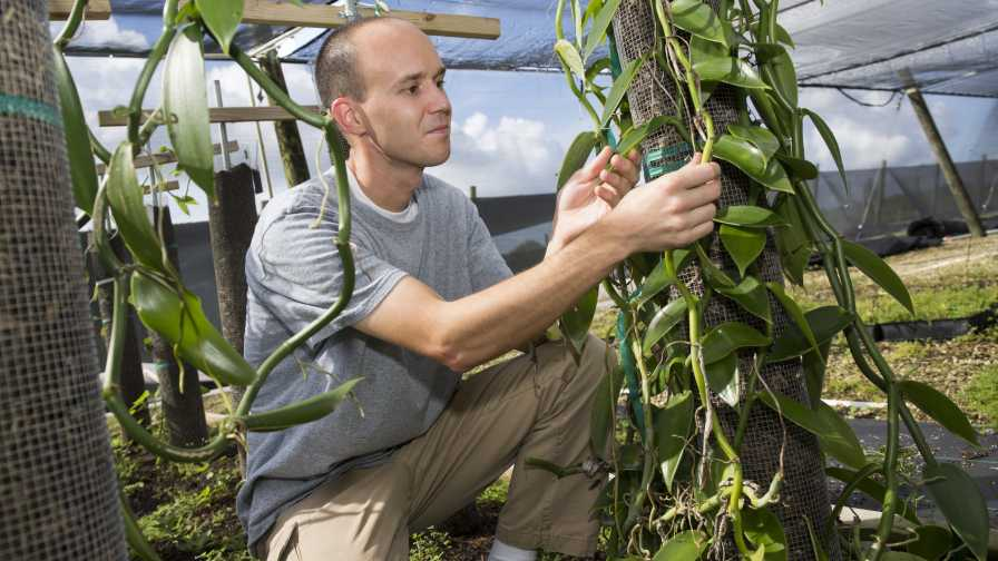 Alan Chambers studies vanilla in Florida