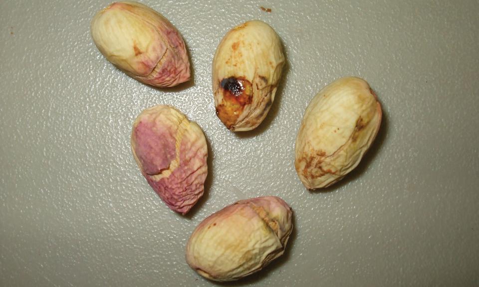 How to Prepare Your Pistachios for Navel Orangeworm Season