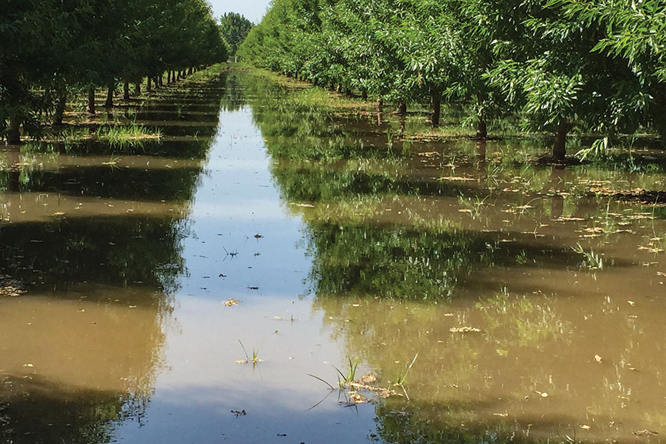 It's Easy to Overlook Soil Crusting in Your Almond Orchard