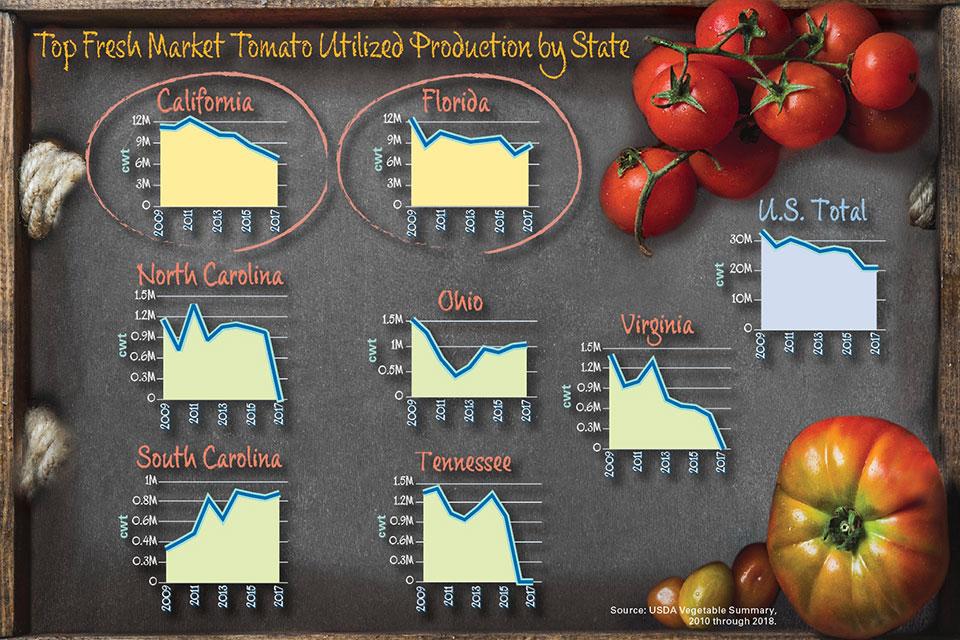 Top-Fresh-Market-Tomato-charts