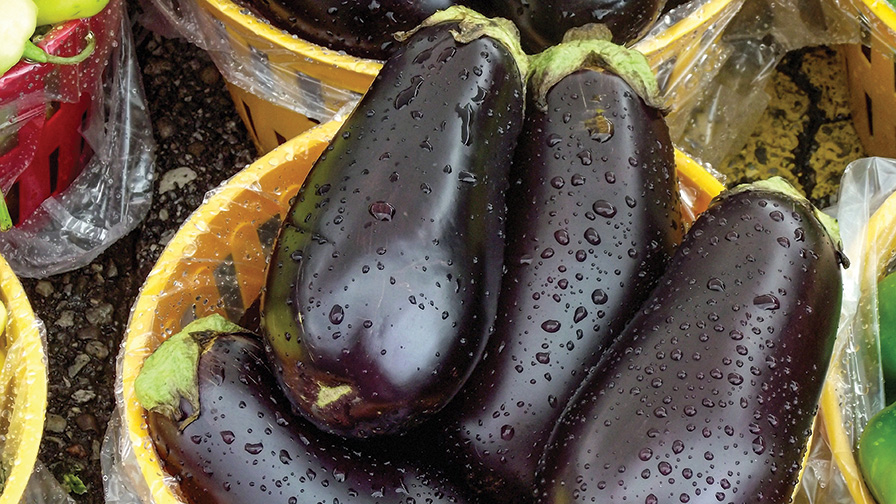 eggplant-beauty-shot_feature