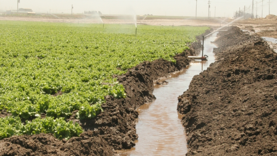 irrigation-run-off-lettuce-FEATURE-Photo-by-Michael-Cahn