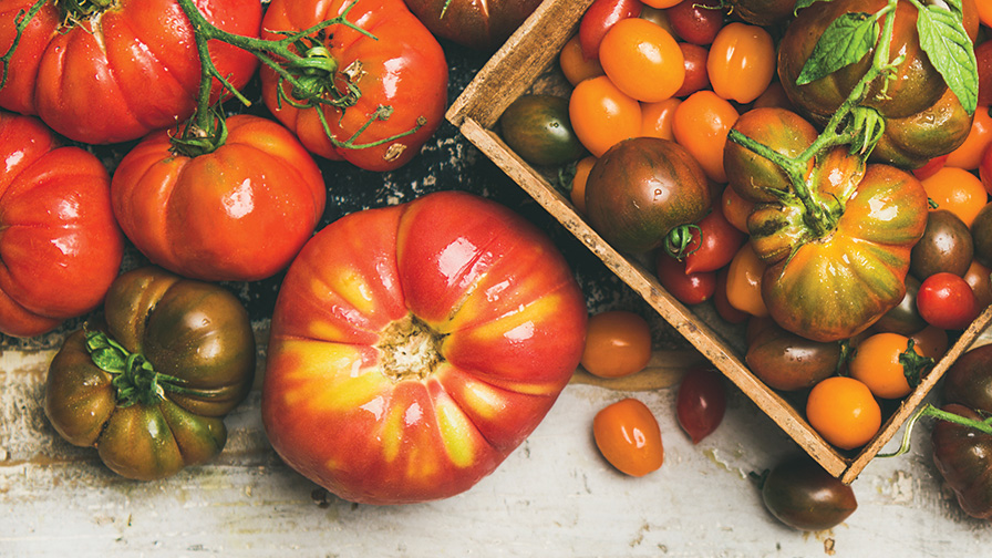 various-tomatoes-stock_feature
