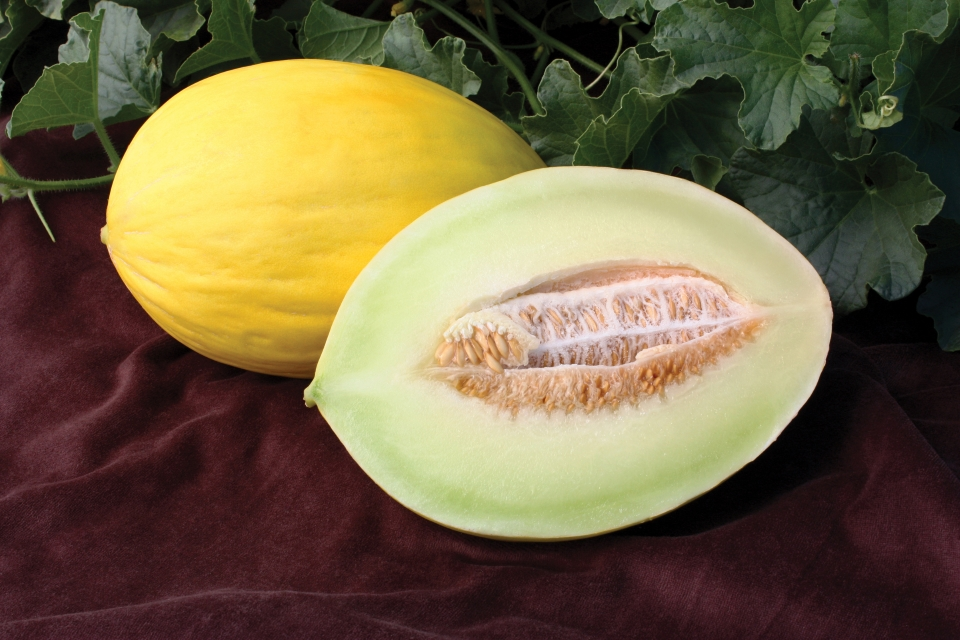 11 Specialty Melons to Round Out Your Crop Mix