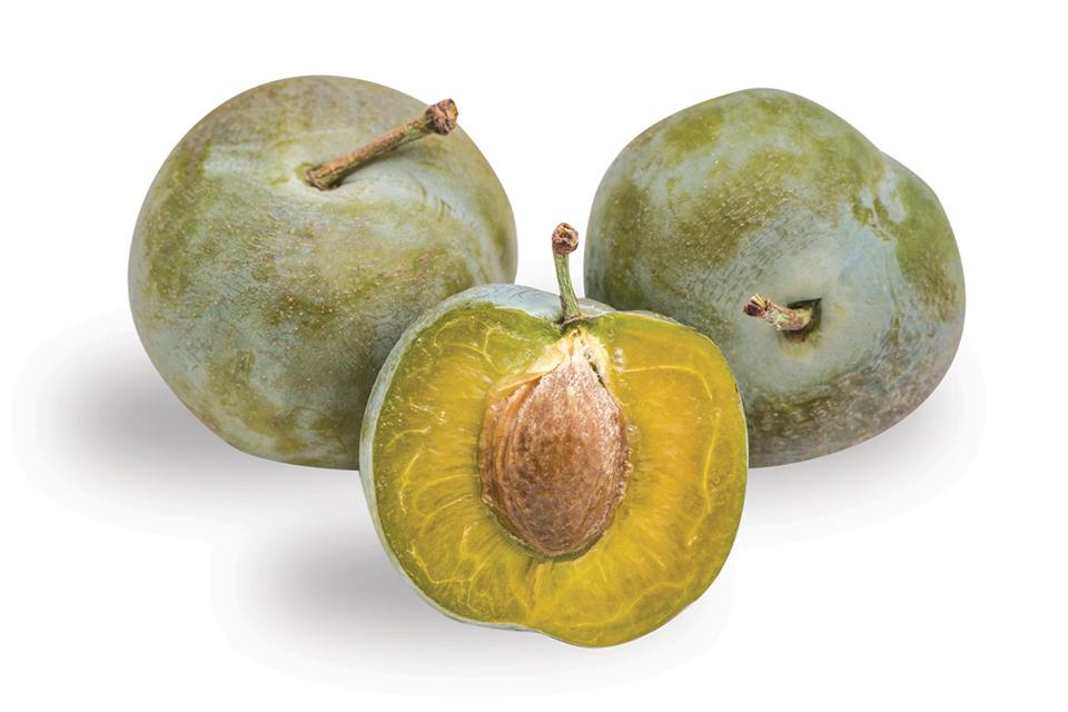 green gage plum