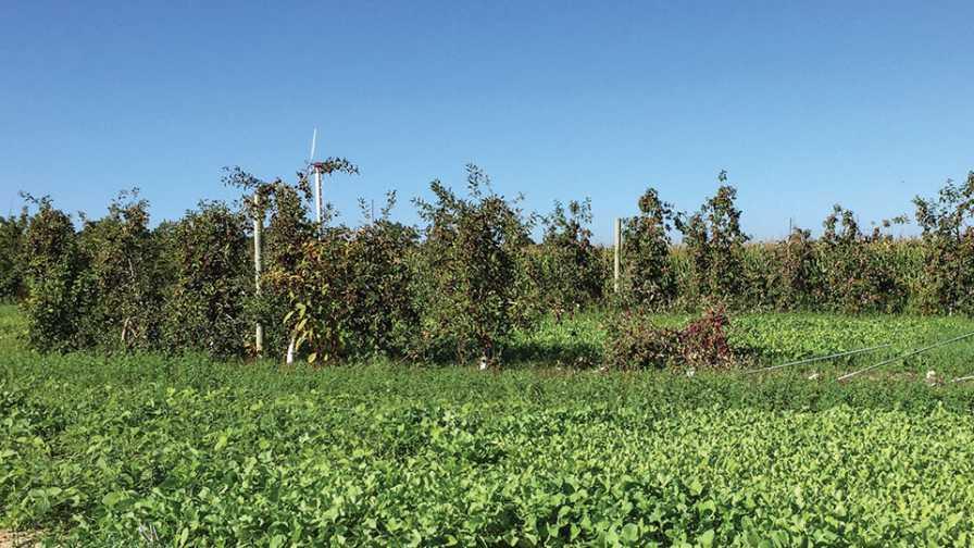 Michigan Apple Replant Project experimental plots