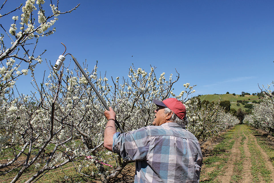 The Last of His Kind Farming Fruit in the Silicon Valley