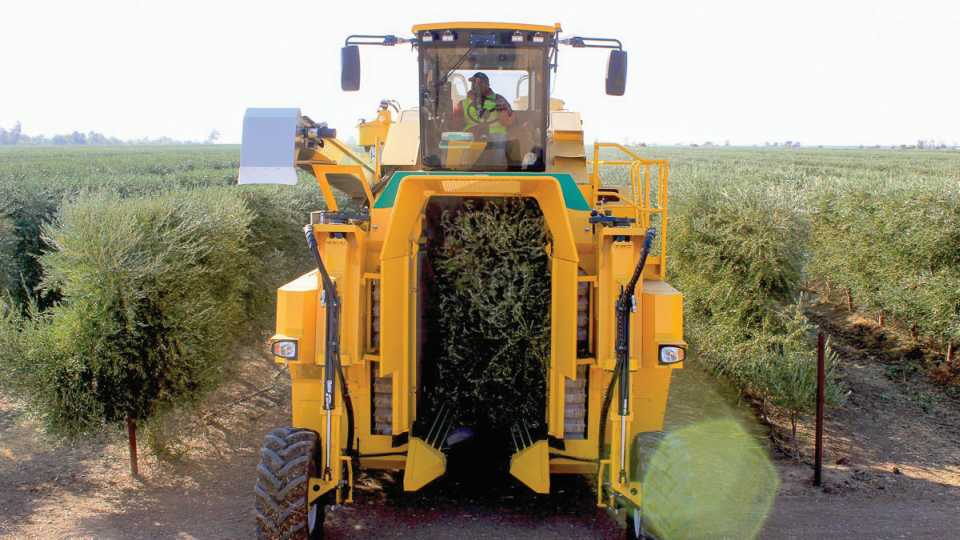 Oxbo 6430 mechanical harvester in action