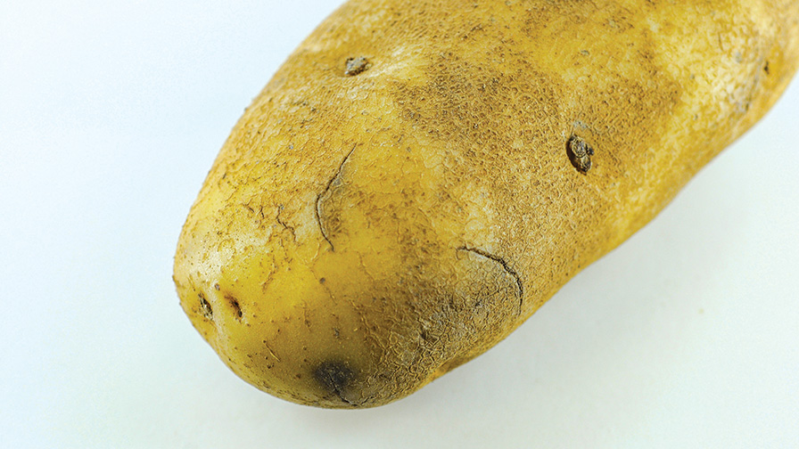 How to Avoid Harvest Damage to Potatoes