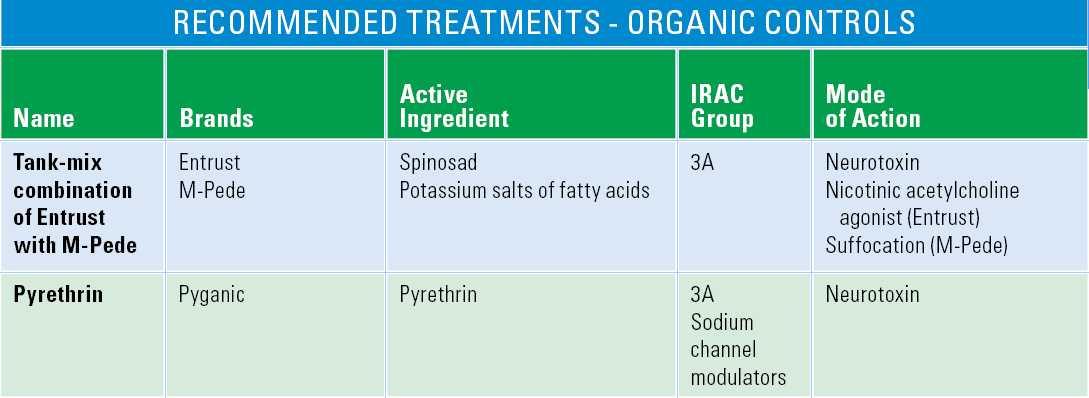 Chart of organic control options for flea beetlehart of