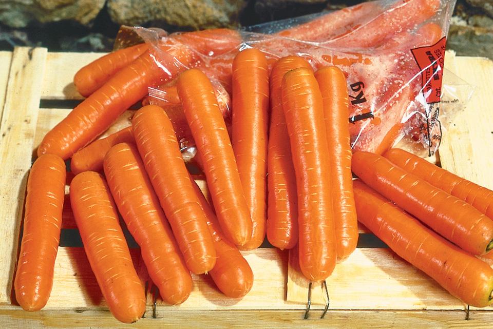 Bolero carrot variety