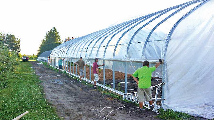 putting plastic on high tunnels for peaches