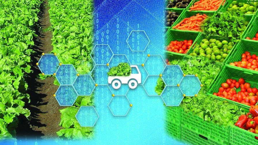 Blockchain and traceability illustration_lettuce