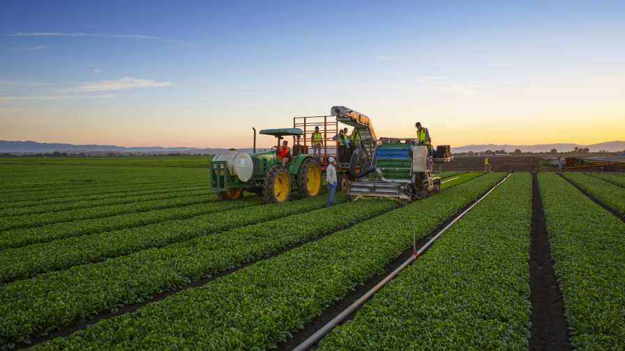 Rijk Zwaan Spinach Harvest