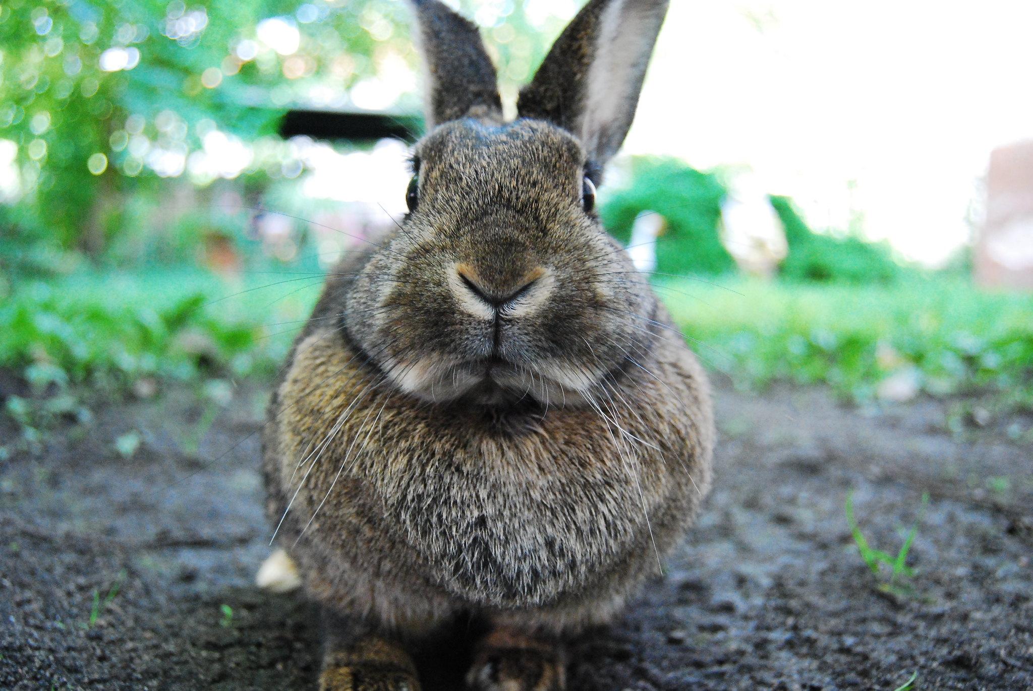 rabbit or bunny free image