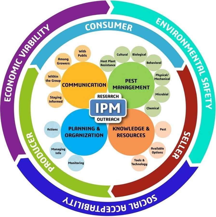 New IPM model infographic