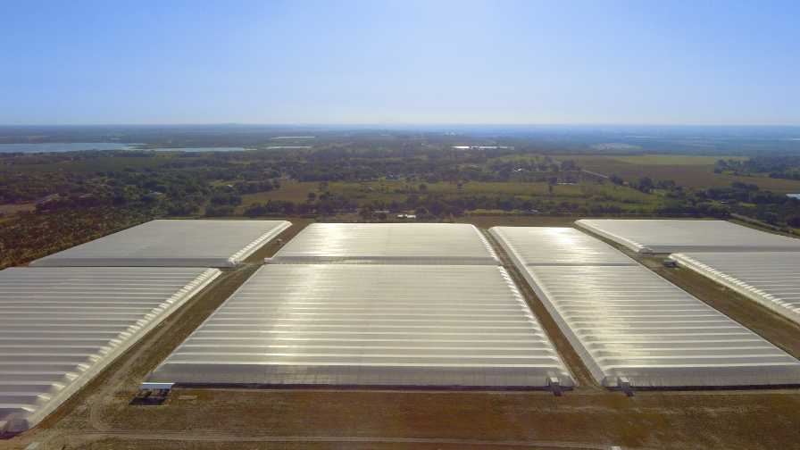 Drone shot of Dundee citrus under protective screen project