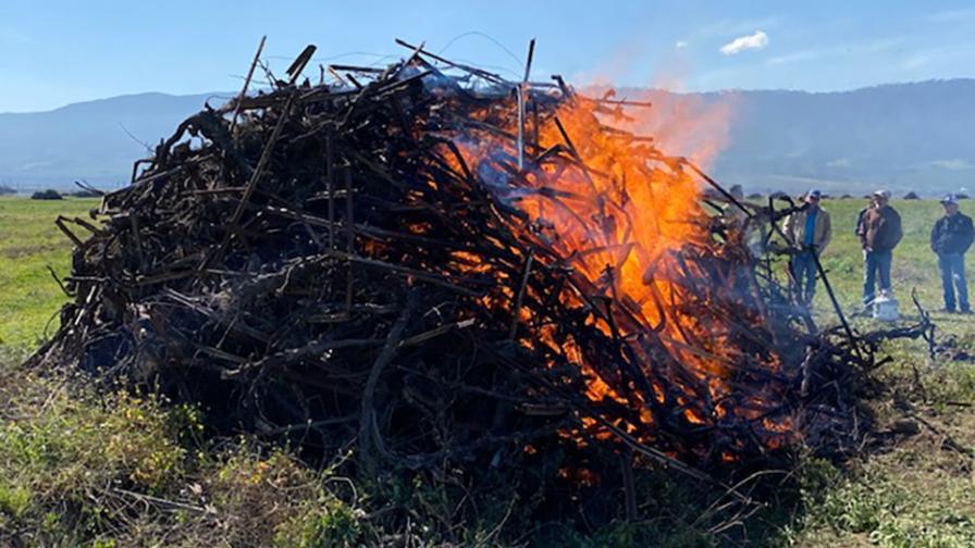 Biochar in flames