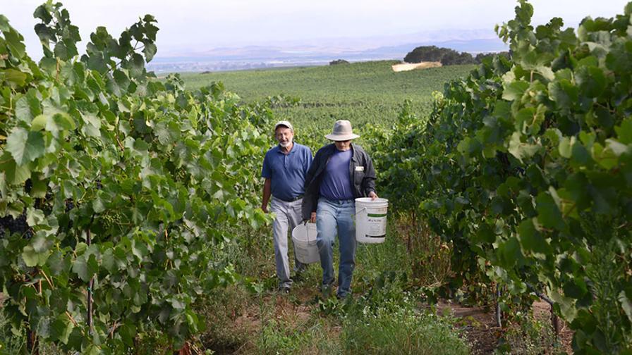 Doug Beck and Milt McGiffen on grape harvest