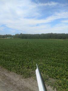 green, healthy farm field